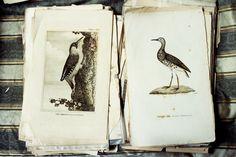 "theoutings: "" Bird Prints """