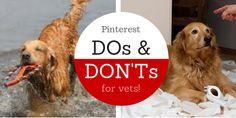 pinterest for veterinary hospitals