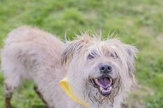 © Lebolo Photography | happy and muddy scruffy dog, rescue dog, on location pet photography