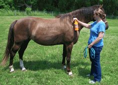Hot Weather Horse Care-- Every horse person should read this after a day like today in Edmonton...