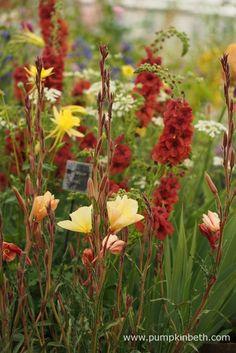 Daisy Roots Nursery Wins Gold at Chelsea! Black Flowers, Orange Flowers, Pretty Flowers, Plant Design, Garden Design, Dry Garden, Perfect Plants, Drought Tolerant Plants, Chelsea Flower Show