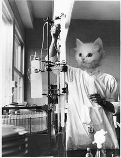 Cat Scientists of the 1960's