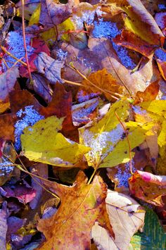 A light snow atop fall leaves in the North Carolina mountains north carolina mountains, mountain rock
