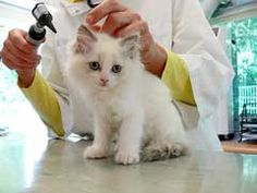 Cat Health Insurance Review - http://www.mypetarticles.com/cat-health-insurance-review/#more-57
