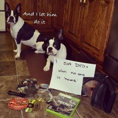 100 Best Dog Shaming Moments