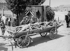 Dachau Picture - U.S. Troops Watch a Passing Cart Laden with Corpses