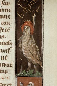 Стильная сова в шляпе Stylish Owl @bodleianlibs Douce 152 f. 70r