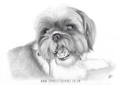 FriYAY! I've never been so glad for a weekend - even though I'll be working for most of it! . Here's another sketch of a sunbathing pet - this beautiful girl is called Phoebe and she is 13 years old! Her portrait was one of the first orders placed through my Etsy shop it was all very exciting!! Her sketch was gifted over Christmas to her fur-family over in the U.S.  . I love her little Shih-Tzu smile isn't she just a beautiful little girl?!