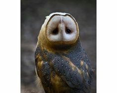 180° owl