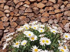 Firewood, Texture, Facebook, Surface Finish, Woodburning, Pattern