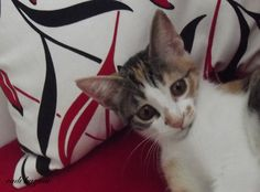 kittenlove15