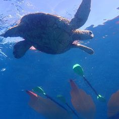 A view from below! #turtletuesday #mkamkn A view from below! #turtletuesday