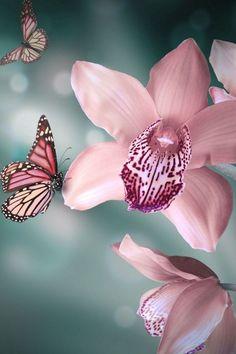 Orchids et papillons <3 *****