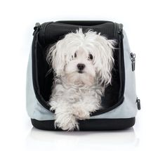 Sleepypod Yummy Travel Bowl Set Medium Very Berry for dogs and cats