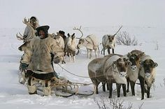 "Expedition ""Paris - New York Transcontinental"": Rentier-Nomaden in Tschukotka, Russia Craftsman, Camel, New York, Earth, Adventure, Animals, Reindeer, Artisan, Animales"