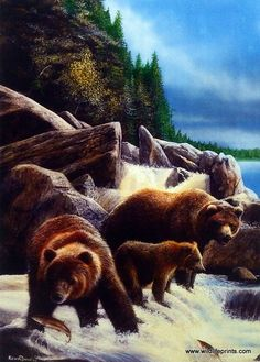 A family of Grizzly Bears go out fishing along the falls, and it looks as though…