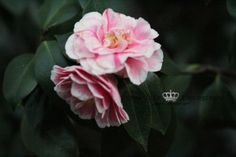 floral, flower, nature, pretty, pink, photography