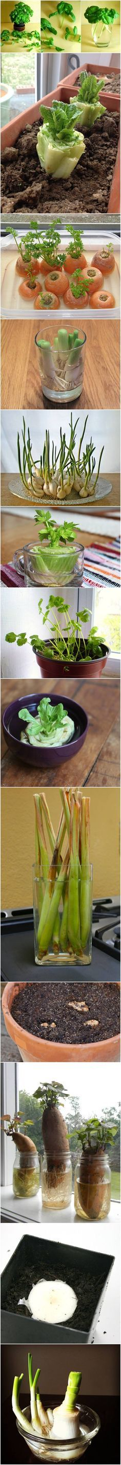 13 Vegetables That You Can Regrow Again And Again #gardening #regrow #recycle