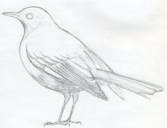 How to Draw a Bird – Bird illustration. In this lesson, you will certainly learn how to draw birds detailed, in pencil. Ways to attract a flying parrot. You will certainly be able to draw a parrot effectively and learn the techniques for attracting any type of bird, also a peacock. ContentsStep 1Step 2Step 3Step ... Read more