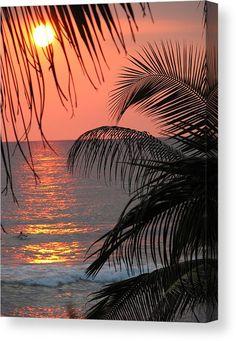 16 Ideas For Nature Photography Ocean Hawaii Palm Trees Palm Tree Art, Palm Tree Sunset, Sunset Beach, Hawaiian Sunset, Beach Sunsets, Palm Trees Beach, Malibu Sunset, Sunset Pics, Sunset Art