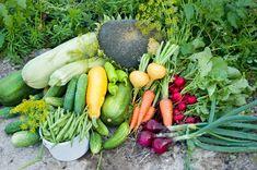 Опытные огородники планируют, где они проложат новые грядки, еще до начала посевного сезона. И это правильно, ведь рациональное использование земли на приусадебном участке повышает урожайность садовы…