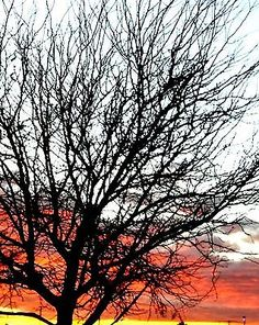 Framed Fine Art Print of a Midwestern Sunrise through a Bare Tree. Originally $186. Now ONLY $86.00 with FREE SHIPPING!!