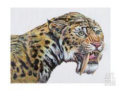 Close-up headshot of Megantereon Pliocene Epoch Canvas Art - Mark HallettStocktrek Images x Prehistoric World, Prehistoric Animals, Canvas Art, Canvas Prints, Art Prints, Dinosaur Posters, Epoch, Find Art, Framed Artwork