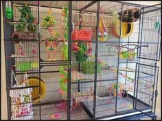 Colorful Small Pet Cage Setup - I love all the colorful toys in this cage, especially the yellow hideout with eyes. The tips in the article are for sugar gliders and not so good for chinchillas but this cage setup is great inspiration. Sugar Glider Care, Sugar Glider Toys, Sugar Gliders, Sugar Glider Habitat, Monkey Cage, Pet Monkey, Pet Bird Cage, Rat Cage, Critter Nation Cage