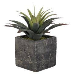 Artificial Star Succulent in Grey Stone Cube Ceramic * Want to know more, click on the image.