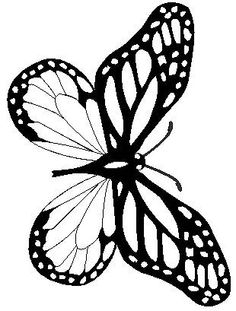 butterfly - Monarch Caterpillar Coloring Page