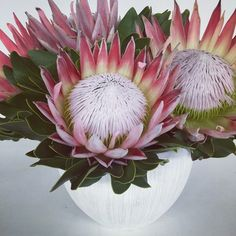 King Pink Flowers in White Vase. Inspiration and ideas for your protea cut flowers. Protea Art, Protea Bouquet, Protea Flower, Flower Vases, Flower Art, Bouquets, Tropical Flowers, Colorful Flowers, Pink Flowers