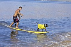 Dogs love to paddle