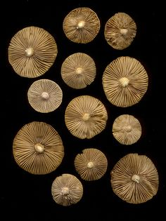 Mushroom gills by Fred Patterns In Nature, Textures Patterns, Growth And Decay, Ceramic Workshop, Seed Pods, Background Pictures, Texture Art, Wall Sculptures, Natural World