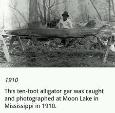 1910 - 10 ft alligator GAR was caught at moon lake Mississippi