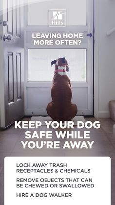 Jobs and school could force you to leave your dog at home for a few hours (unless you're among the fortunate few that get to bring your dog to work with you). So, how can you make sure your dog stays safe and happy while you're away? Fun Facts About Dogs, Dog Facts, Puppy Pads, Animal Nutrition, Leaving Home, Home Alone, Training Your Puppy, New Puppy, Kids House