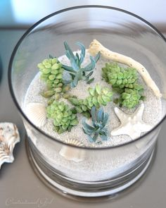 I experimented with some white sand poured around the succulents in soil in their containers to create a coastal version, adding a piece of driftwood and some shells.