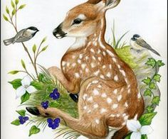 Deer, Fawn, Bird, Animal, Watercolor, Painting, Illustration, Art