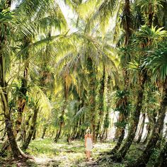 A lush canopy of palms on Zapatilla Cay, part of the Bastimentos National Marine Park, in Panama