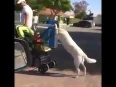 Funny children and dog - mom prank - animal vine