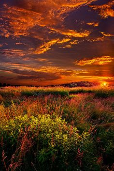 Orange and gold autumn landscape in Wisconsin (Photo by Phil Koch) Beautiful Sunset, Beautiful World, Beautiful Places, Amazing Places, Landscape Photography, Nature Photography, Amazing Nature, Belle Photo, Pretty Pictures