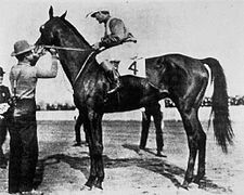 Elwood. 1904 Kentucky Derby winner; first winner to be both bred and owned by a woman. Jockey: Shorty Prior. Winning time: 2:08 1/2