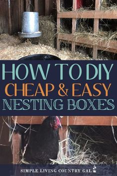Mar 2020 - How to build milk crate nesting boxes for your chickens using materials you have around your farm for next to nothing! Chicken Garden, Backyard Chicken Coops, Chicken Coop Plans, Building A Chicken Coop, Diy Chicken Coop, Chickens Backyard, Chicken Tractors, Chicken Boxes, Chicken Nesting Boxes
