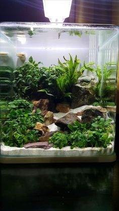 Some interesting betta fish facts. Betta fish are small fresh water fish that are part of the Osphronemidae family. Betta fish come in about 65 species too! Planted Aquarium, Aquarium Terrarium, Tropical Fish Aquarium, Tropical Fish Tanks, Aquarium Fish Tank, Planted Betta Tank, Aquarium Aquascape, Aquascaping, Aquarium Design
