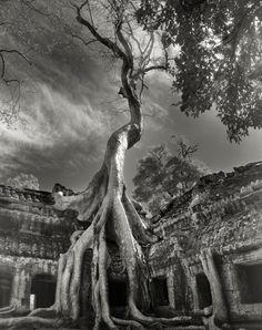 Rooted Passage, Rilke's Bayon, Siem Reap, Cambodge, 2007 | «Les temples d'Angkor Wat, au Cambodge, sont sûrement les réalisations architecturales les plus étonnantes et durables de l'homme. Aujourd'hui, il ne reste pratiquement que des ruines négligées. Ces temples bouddhistes sont chevauchés par d'immenses troncs de ficus dont les racines serpentent à travers les pierres pour atteindre le sol.» Crédit: Beth Moon