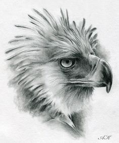 how to draw eagles | how to draw : Philippine eagle