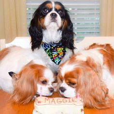 Ollie,Maggie, and Harley ♥