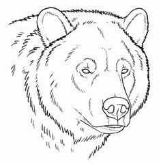 Tutorial about Grizzly bears. You'll find three head shots in different positions and expressions, some notes about bear paws and a full body grizzly Bear Face Drawing, Grizzly Bear Drawing, Animal Drawings, Art Drawings, Drawings Of Bears, Bear Sketch, Bear Paintings, Online Drawing, Bear Art