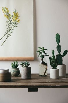 Botanical Details and Plant Styling. How to create a perfect plant filled home.