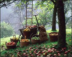 fall is the busy season in the country