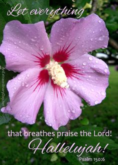 """One day I had an Ah Ha! moment. I always wondered, """"Why do we praise God?"""" He doesn't """"need"""" anything from us. So why must we praise him? Finally...I """"get"""" it!"""